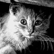 Kitty In Black White Poster