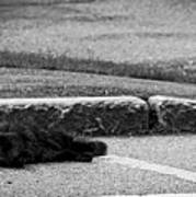 Kitty In The Street Black And White Poster