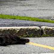 Kitty In The Street Poster