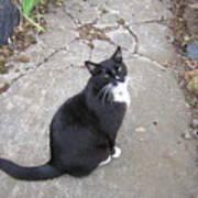 Kitty Kitty Kitty Poster