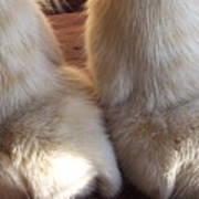 'kitty Paws' Poster