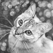 Kitty The Cat Poster