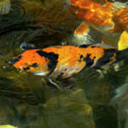 Koi Fish Blowing Bubbles Poster