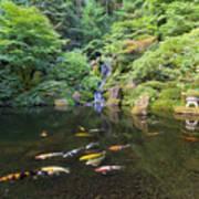 Koi Fish In Waterfall Pond At Japanese Garden Poster
