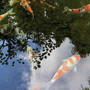 Koi Pond Reflection Poster