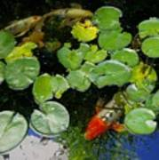Koi With Lily Pads D Poster