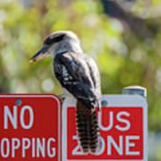 Kookaburra On A Road Sign Poster
