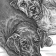 Labrador Dogs Nap Time Poster