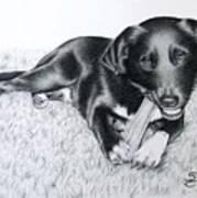 Labrador Samy Poster