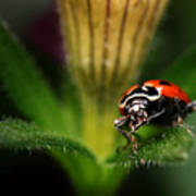 Lady Bug 1 Poster
