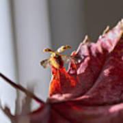 Lady Bug Flight Poster