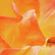 Ladybug Alights Poster