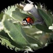 Ladybug On Sage With Swirly Framing Poster