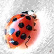 Ladybug Spectacular Poster