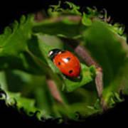 Ladybug With Swirly Framing Poster