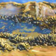 Laguna Beach Tide Pool Pattern 3 Poster