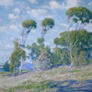 Laguna Trees Poster