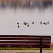 Lake Bench Poster