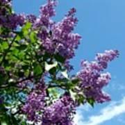 Lake Country Lilacs Poster