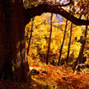 Lake District - Fall Colors Near Aira Force Poster