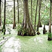 Lake Martin Swamp Poster