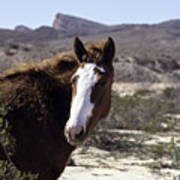 Lake Mead Mustang Poster