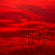 Lake Reeds And Red Sunset Poster