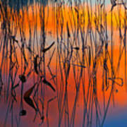 Lake Reeds And Sunset Colors Poster