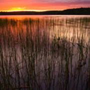 Lake Reeds At Sundown Poster