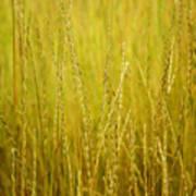 Lake Tahoe Wild Grasses Poster