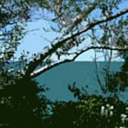 Lake Through The Trees Poster