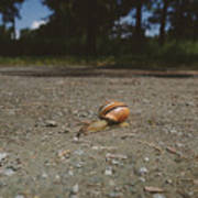 Landscape Of The Snail Poster