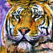 Landscape Tiger Poster