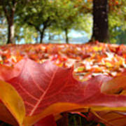 Landscape Trees Park Art Prints Autumn Fall Leaves Baslee Troutman Poster