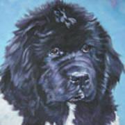 Landseer Newfoundland Puppy Poster