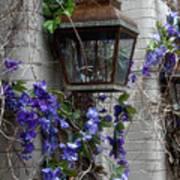 Lantern N Vines Poster
