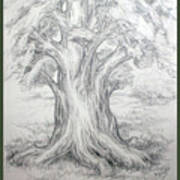 Large Shady Tree Poster
