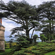 Large Trees At Chateau De Chaumont Poster