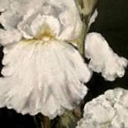 Large White Iris Poster