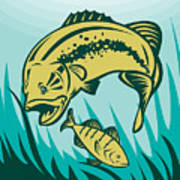 Largemouth Bass Preying On Perch Fish Poster by Aloysius Patrimonio
