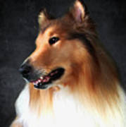 Lassie- Collie Poster