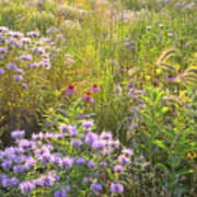 Last Rays Of Sun Light Wildflowers In Moraine Hills Sp Poster
