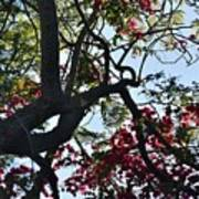 Late Afternoon Tree Silhouette With Bougainvilleas I Poster