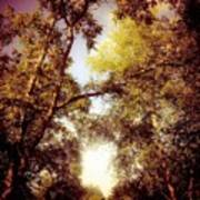 Late Summer View Of Sky And Trees Poster