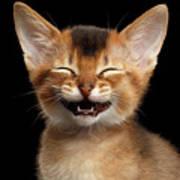 Laughing Kitten  Poster