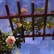 Laura's Rose Trellis 2 Poster by Jen White