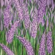 Lavender Blooms Poster