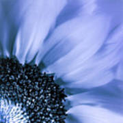 Lavender Blue Silk Poster