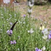 Lavender Butterflies Poster