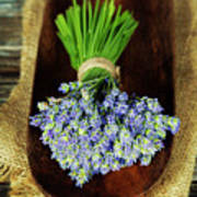 Lavender Flower  Poster